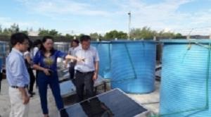 Hà Tĩnh chế biến nước mắm quy mô công nghiệp sử dụng năng lượng mặt trời